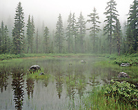 Mixture of trees reflecting in Road Bend Lake in Mt Hood National Forest,Oregon