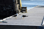 Two seaguls at a pier in Oslofjorden, outside Oslo, Norway