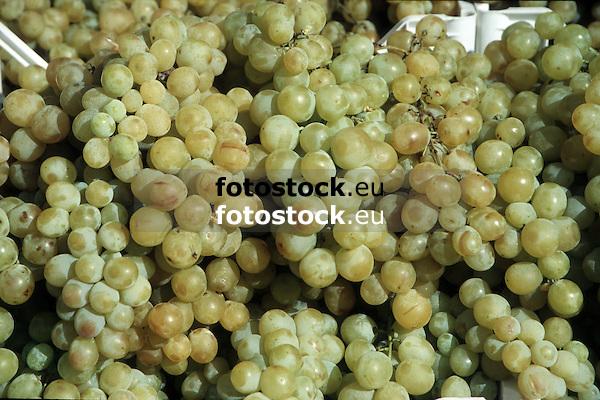 Weißweintrauben<br /> <br /> white wine grapes<br /> <br /> uvas de vino blanco<br /> <br /> 1870 x 1246 px<br /> Original: 35 mm slide transparancy