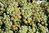 Weißweintrauben<br />