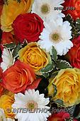 Gisela, FLOWERS, BLUMEN, FLORES, photos+++++,DTGK2308,#F#, EVERYDAY