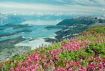 View of Glacier Bay with fireweed and lupine, Glacier Bay National Park, Alaska, USA
