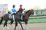 April 12, 2014: #9 Strong Mandate with jockey Luis Saez aboard before the start of the Arkansas Derby (Grade I) at Oaklawn Park in Hot Springs, AR. Zoie Clift/ESW/CSM