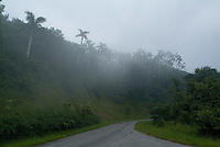 Mist falling over coconut trees beside a road between Soroa and Las Terrazas, Cuba.