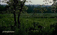 MD07-001p  Fireflies at Night - Digitally Inhanced