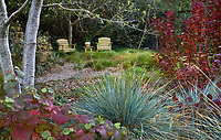 Secluded sitting area garden room with chairs in drought tolerant California meadow garden edged with shrubs and trees and Blue Oat Grass