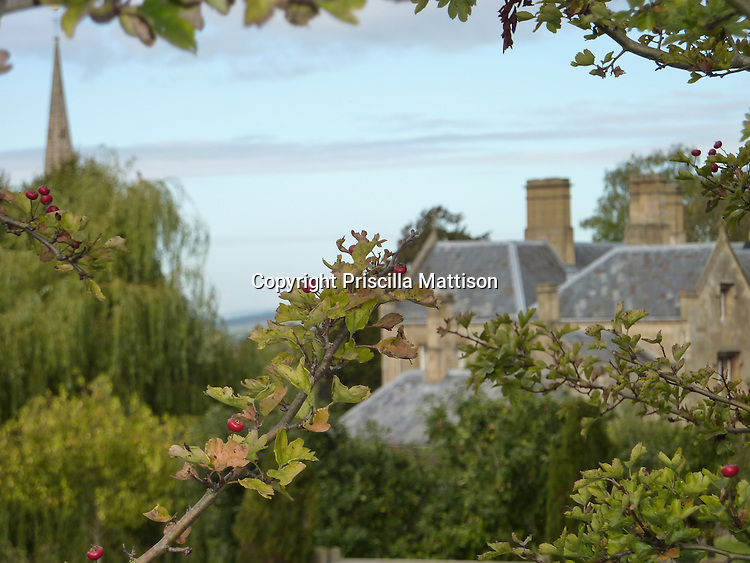 Cotswolds, England - September 20, 2009:  Village roofs and a steeple are visible through the branches of a crabapple tree.