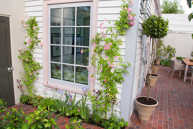 Roses Rosa trained against house next to window, in pink bloom with blue irises, matching rim of home decor, brick patio, topiary plants in container garden, furniture, window, door, to create pretty garden scene and nice landscaping