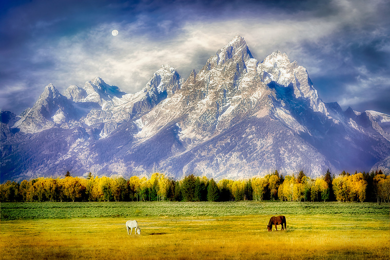 Horses grazing in pasture with Teton Mountains. Grand Teton National Park, WY