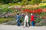 Insel Mainau, Island of Mainau, Bodensee, Lake Constance, Baden-Württemberg, Germany, Deutschland. Die Dahlien (Dahlia), bilden eine Pflanzengattung in der Familie der Korbblütler (Asteraceae).