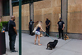 New York New York<br /> June 7, 2020<br /> <br /> After several nights of looting, nearly all ground level windows in Manhattan are covered with plywood. Many of the shops had already been looted others are boarded for protection. <br /> <br /> Saks Fifth Avenue took it to an extreme. Barbed wire, boarded up, fenced in, with a large man (mainly African American) every 10 feet, with K9 dog unit standing all day in front of the store front. Many times the dogs and owners do drills in lockstep while growling and barking at passing pedestrians.