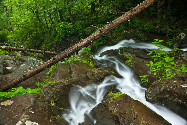 Spring flow over Lower Dark Hollow Falls on Hogcamp Branch