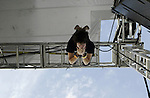 Taking Back Sunday lead singer Adam Lazzara hangs from the rafters of the stage at the This Island Earth Fest, Medford, Long Island, NY (MARK R. SULLIVAN/HNT CHIEF PHOTOGRAPHER)