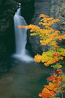Red maple and Lower Falls<br /> Watkins Glen Gorge<br /> Watkins Glen State Park<br /> Finger Lakes Region,  New York