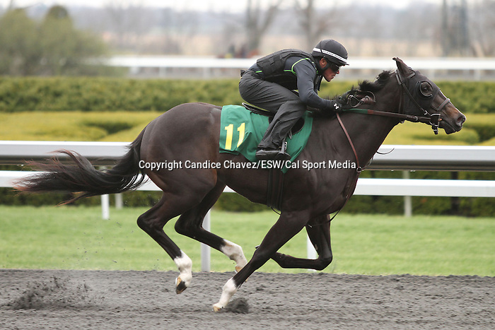 April 03, 2014: Hip 11 More Than Ready - Miss Seffens consigned by Niall Brennan worked 1/8 in 09:3.  Candice Chavez/ESW/CSM