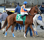 Mental Iceberg (no. 5), ridden by Guillermo Rodriguez and trained by Gregory DiPrima, runs in the 100th running of the grade 2 Remsen Stakes for two year olds on November 30, 2013 at Aqueduct Race Track in Ozone Park, New York.  (Bob Mayberger/Eclipse Sportswire)