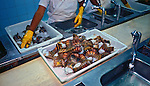 Industria alimenticia de beneficiamento de lagosta. Fortaleza, Ceara. 1998. Foto de Juca Martins.