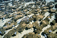 modern stromatolites or stromatoliths - limestone accretion formed by cyanobacteria, that may be up to 1,000 years old - fossilized stromatolites are the oldest known life forms on earth and can be up to 3.7 billion years old, Hamelin Pool Marine Nature Reserve, Shark Bay, UNESCO World Heritage Site, Western Australia, Australia, Indian Ocean