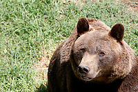 A bear at the Bioparco of Rome, Italy, August 8, 2017. Rome temperatures exceeded 40 degrees C.<br /> UPDATE IMAGES PRESS/Riccardo De Luca