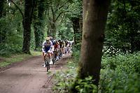 Pieter Van Speybroeck (BEL/Wanty - Gobert)<br /> <br /> Dwars door het Hageland 2019 (1.1)<br /> 1 day race from Aarschot to Diest (BEL/204km)<br /> <br /> ©kramon
