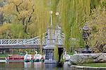 Swan boats in the Boston Public Garden, Boston, MA, USA
