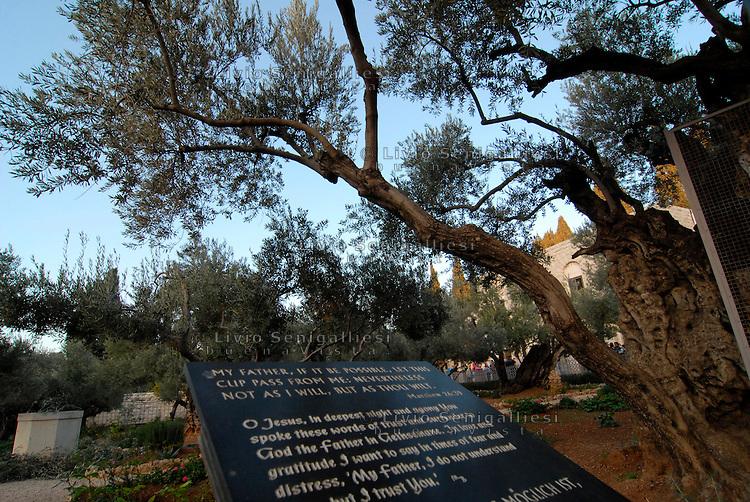 Gerusalemme / Israele.Monte degli Ulivi.Foto Livio Senigalliesi..Jerusalem / Israel.Mount of Olives.Photo Livio Senigalliesi