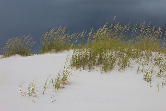 Small coastal dunes and sea oats. Gulf Islands National Seashore, Florida. June.