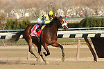 11 27 2010: Dixie City With Jose Lezcano up win the 89th running of the Grade II Demoiselle for 2-year olds, at 1 1/8 miles, Aqueduct Racetrack, Jamaica, NY. Trainer Anthony Dutrow. Owners Edward P. Evans.