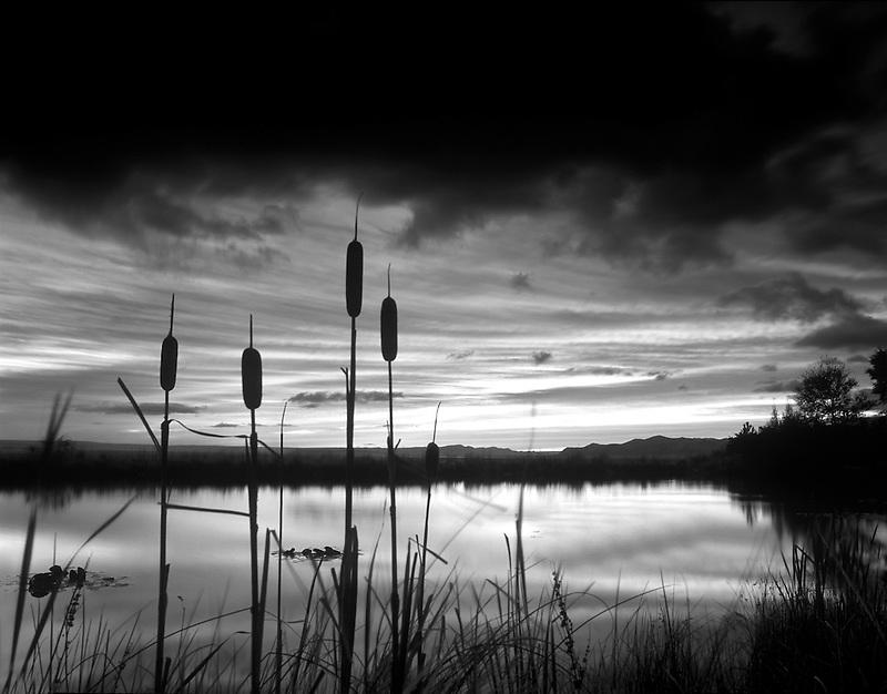 Cattails on pond at Summer Lake Inn, Oregon