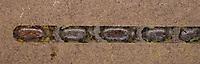 Rote Mauerbiene, Entwicklung, 9. Puppe, Puppen in Kokon, Puppenkokon in Brutkammer mit Trennwand aus Lehm. Entwicklungsreihe Entwicklungsstadien, Brutröhre, Niströhre im Querschnitt, Brutkammer, Brutkammern, Rostrote Mauerbiene, Mauerbiene, Mauer-Biene, Nest, Neströhre, Niströhren, Wildbienen-Nisthilfe, Wildbienennisthilfe, Osmia bicornis, Osmia rufa, red mason bee, mason bee, L'osmie rousse, Mauerbienen, mason bees
