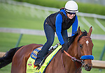 APRIL 27, 2014: Hoppertunity, trained by Bob Baffert, exercises in preparation for the Kentucky Derby at Churchill Downs in Louisville, KY. Jon Durr/ESW/CSM