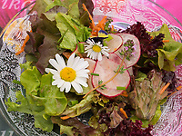 Salatteller, Fa. A. Vogel in Roggwil, Kanton Thurgau, Schweiz<br /> salad plate, A. Vogel in Rogwil, Canton Thurgau, Switzerland