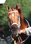 19 September 2009: Grand Rapport before the Futurity Stakes at Belmont Park in Elmont NY.