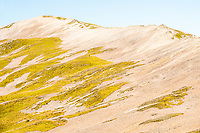 Bare tops of Lake Angelus Ridge with patterns of grass in sand, Nelson Lakes National Park, South Island, New Zealand, NZ