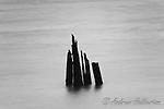 Pilings, Columbia River