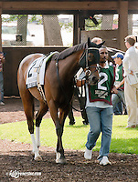 Star's Tizzy Fit before The Obeah Stakes (gr 3) at Delaware Park on 6/15/13