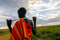 UGANDA, Karamoja, Karimojong pastoral tribe, young shepherd with cows on pasture land during dusk and sunset, rain cloud