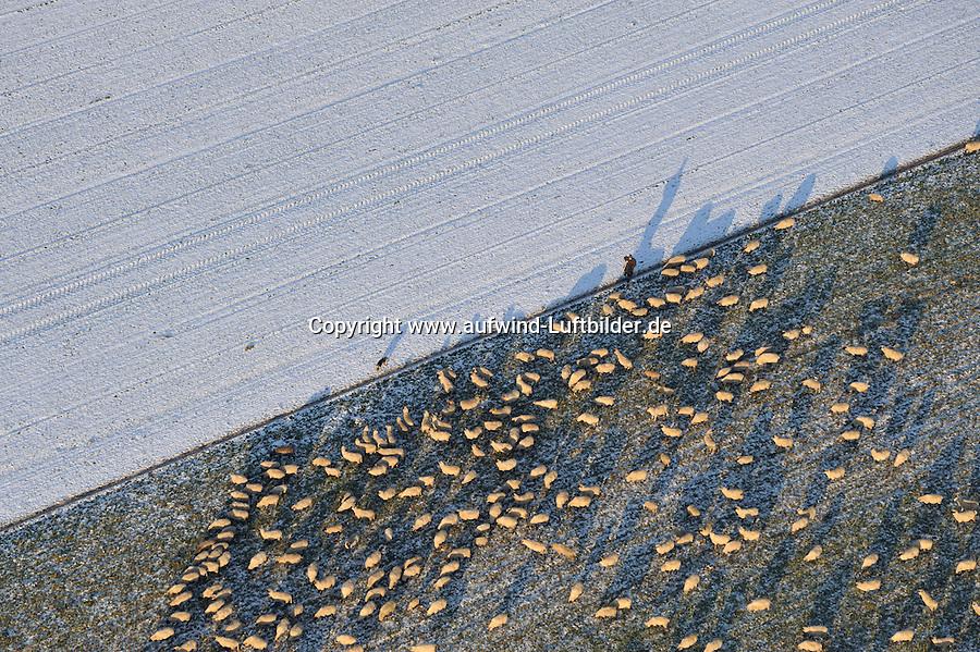 Schafsherde im Schnee: EUROPA, DEUTSCHLAND, NIEDERSACHSEN (EUROPE, GERMANY), 10.01.2009: aerial picture, aerial view, agriculture, animal,  birds eye view, cattle breeding, Deutschland, Germany, Herde, Kleinvieh, landscape, Landschaft, Landwirtschaft, Luftaufnahme, Luftbild, Nutztier, Schaf, Schafherde, Schaefer, Hund, Schafzucht, Sheep, Tier,  Viehzucht, genuegsam, der letzte Halm, Vogelperspektive, Luftbild, Luftansicht, Luftaufnahme .c o p y r i g h t : A U F W I N D - L U F T B I L D E R . de.G e r t r u d - B a e u m e r - S t i e g 1 0 2, .2 1 0 3 5 H a m b u r g , G e r m a n y.P h o n e + 4 9 (0) 1 7 1 - 6 8 6 6 0 6 9 .E m a i l H w e i 1 @ a o l . c o m.w w w . a u f w i n d - l u f t b i l d e r . d e.K o n t o : P o s t b a n k H a m b u r g .B l z : 2 0 0 1 0 0 2 0 .K o n t o : 5 8 3 6 5 7 2 0 9.V e r o e f f e n t l i c h u n g  n u r  m i t  H o n o r a r  n a c h M F M, N a m e n s n e n n u n g  u n d B e l e g e x e m p l a r !.