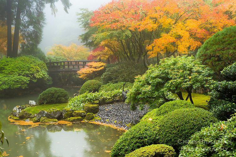 The upper pond of the strolling pond garden (chisen kaiyu shiki niwa) is in full Fall colors in maple trees of red and orange shrouded in fog.  Moon Bridge is iconic symbol in the Portland Japanese Garden.