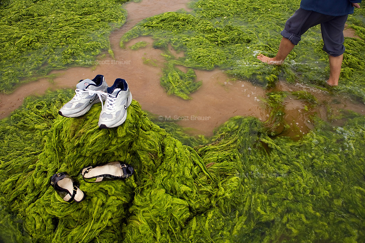 A man walks through algae on the Shilaoren Beach in Qingdao, Shandong, China.  Algae is covering the bay and locals are working to clean it up before the Olympics in August...Qingdao is the host of the sailing events for the 2008 Summer Olympics. Algae blooms like this have become common in inland lakes in China, often caused by high pollution in bodies of water.  The city is asking for help and forcing residents to take part in the cleanup effort before the Olympic events..