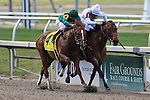 NEW ORLEANS, LA - FEBRUARY 20:<br /> Majestic Harbor #1, ridden by Corey J Lanerie comes down the final stretch ahead of the field on the way to win the Mineshaft Handicap Stakes in the Louisiana Derby Preview Race Day at Fairgrounds Race Course on February 20,2016 in New Orleans, Louisiana. (Photo by Steve Dalmado/Eclipse Sportswire/Getty Images)