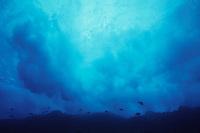 waves crashing onto rocks, silhouette of reef fish, Cocos Island, Costa Rica, Pacific Ocean