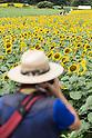 Sunflower Festival in Tokyo