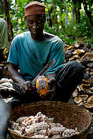 Kuapa Kokoo worker Elias Mohammed splitting cocoa pods. Kuapa Kokoo is a cocoa farmers' co-operative with 45,000 members spread across the forests of Kumasi. The farmers jointly own a 45 percent stake in the company, which is also a major stakeholder in the London-based fair trade company Divine Chocolate Ltd..