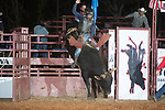 SEBRA - Blackstone, VA - 10.22.2017 - Bulls & Action