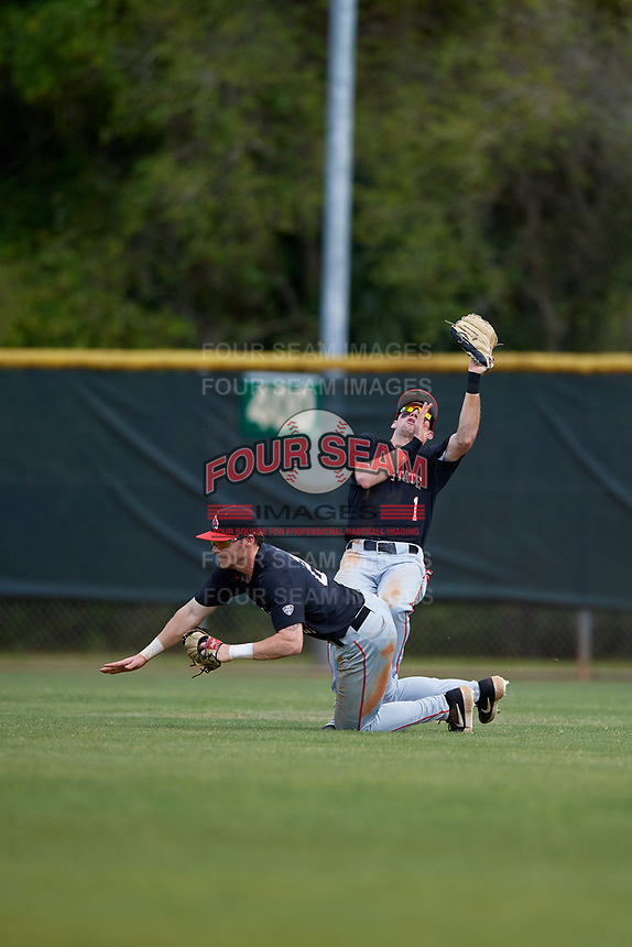 Ball State Cardinals center fielder Aaron Simpson (1) catches a fly ball as right fielder Ross Messina (23) avoids collision during a game against the Saint Joseph's Hawks on March 9, 2019 at North Charlotte Regional Park in Port Charlotte, Florida.  Ball State defeated Saint Joseph's 7-5.  (Mike Janes/Four Seam Images)
