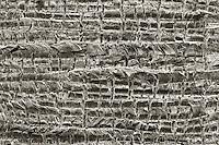 Close up of palm tree bark. Palm Desert, California