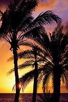 sunset and palm trees at Princess Beach, Curacao, Netherland Antilles or Dutch ABC Islands ( Caribbean Sea ), Atlantic