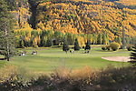 Friends playing golf in Vail Valley, Colorado. John offers autumn photo tours throughout Colorado.