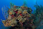 Colorful Reef scenic, Cuba Underwater, Jardines de la Reina, Protected Marine park underwater